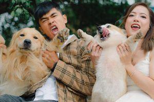 Quán cà phê gần 40 con chó hút khách ở Đà Lạt