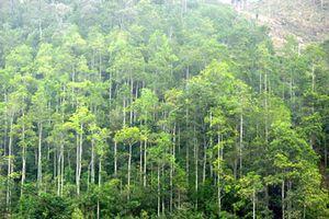 Triển khai Hiệp định thực thi lâm nghiệp, quản trị rừng và thương mại lâm sản