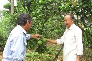 Già làng Văn luôn 'đầu tàu' gương mẫu