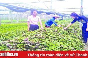 Huyện Thiệu Hóa phát huy hiệu quả tín dụng chính sách