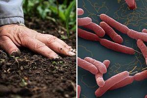 Vi khuẩn Whitmore lây lan theo những đường nào?