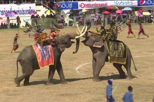 Cả trăm 'voi chiến' Thái Lan tái hiện trận chiến thời xưa