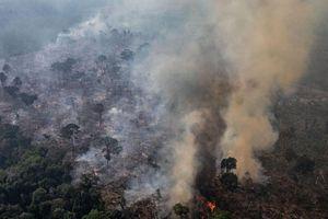 Tỷ lệ phá rừng của Amazon đạt mức cao kỷ lục