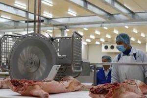 Giá thịt lợn 'phi mã' có thể phá vỡ ngành chăn nuôi