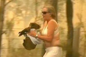 Người phụ nữ cởi áo ôm koala chạy khỏi đám cháy