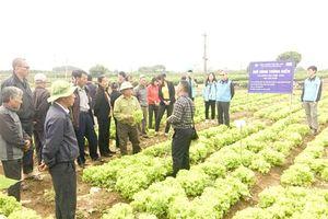 Đánh giá mô hình rau Hàn Quốc tại xã Văn Đức