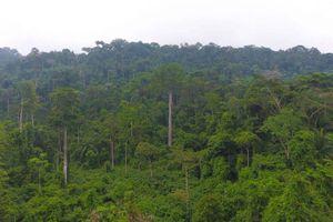 Ý tưởng trả tiền để các nước ngừng phá rừng đang phát huy hiệu quả