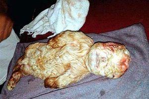 Vụ dê mặt người: Đang điều tra thực hư người lai động vật