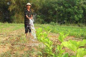 Khuyến khích khôi phục nghề trồng dâu nuôi tằm
