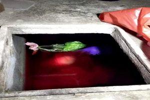 Con rể vứt xác mẹ vợ vào bể nước mưa