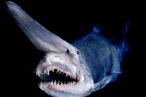 25 loài 'quái thú' dị nhất hành tinh