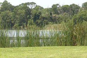 Hẹn người yêu bên sông, hoảng hồn phát hiện 10 con cá sấu xâu xé thi thể