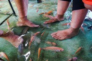 Khách vừa ăn vừa ngâm chân trong bể chứa 7.000 con cá