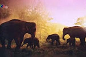 Triển lãm tranh và nhảy tập thể để tuyên truyền bảo vệ voi