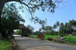 Trao quyết định làng cổ Đường Lâm là điểm du lịch