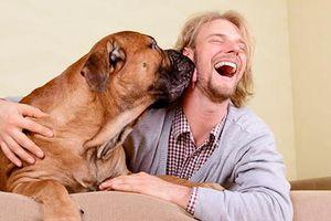Nghiên cứu về mối quan hệ gắn kết giữa người và chó
