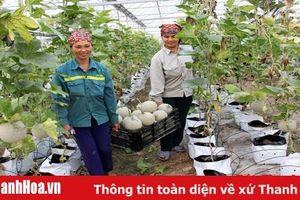 60 đơn vị sản xuất rau, quả an toàn trên địa bàn tỉnh được kiểm soát chất lượng