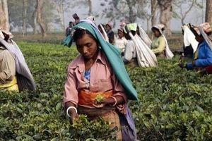 Châu Á cần đầu tư thêm 800 tỷ USD để tránh khủng hoảng lương thực trong thập kỷ tới