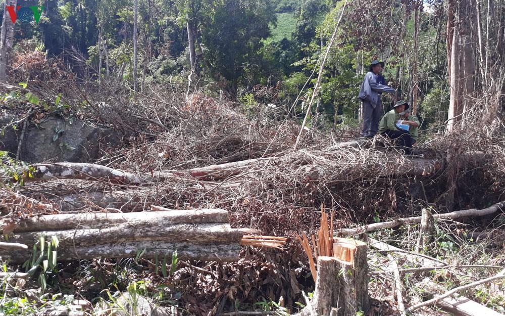 Phát hiện vụ phá hơn 6.500 m2 rừng ở Đam Rông, Lâm Đồng