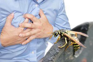 Lên cơn nhồi máu cơ tim sau khi bị ong đốt