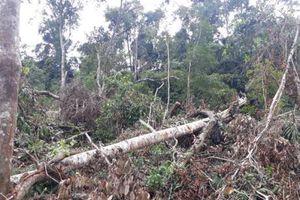 Phát hiện vụ phá rừng phòng hộ quy mô lớn tại Lâm Đồng