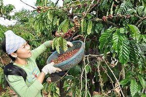 Xuất khẩu nông sản: Thay đổi tư duy cũ