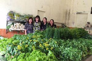 Lào Cai: Trồng rau an toàn giúp nhiều hộ dân thoát nghèo