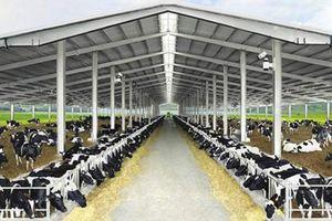 Quảng Ninh 'gật đầu' cho TH True Milk làm dự án bò sữa và chế biến sữa hơn 2.568 tỷ đồng