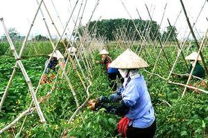Tập trung ruộng đất hình thành sản xuất nông nghiệp hàng hóa