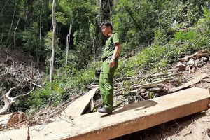 Có dấu hiệu hình sự vụ phá rừng đặc dụng Nam Kar