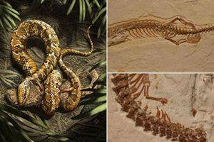 Nghiên cứu hóa thạch mới khẳng định rắn từng có 2 chân