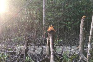 Kiểm tra toàn bộ tuyến sau vụ rừng phòng hộ xung yếu biển Đông bị chặt phá