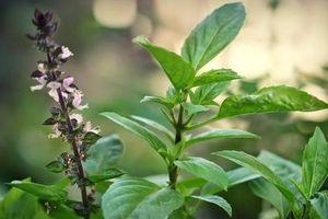 Công dụng tuyệt với của những kháng sinh tự nhiên để tăng sức khỏe ngày đông