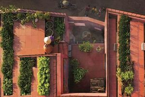 Trồng rau trên mái nhà: xanh, mát, đẹp, sạch