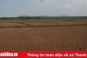 Hơn 7.000 ha vùng đồng bằng ven biển có nguy cơ bị ảnh hưởng xâm nhập mặn