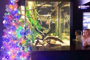 Xem lươn điện thắp sáng cây thông Noel
