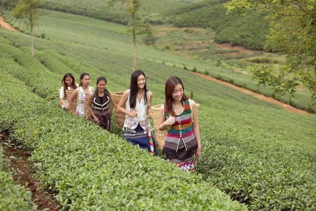 Đỗ Mỹ Linh và Kiều Loan hóa thôn nữ giữa đồi trà Bảo Lộc