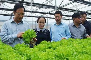 Quảng Ninh: HTX liên kết sản xuất an toàn tạo điểm tựa cho nông dân
