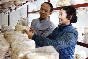 Bắc Giang: Sức lan tỏa từ mô hình trồng nấm sạch
