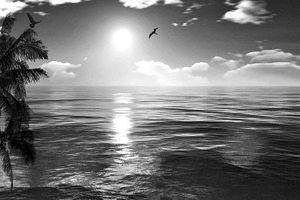 Giăng lưới bắt chim - mối ngờ thiên cổ