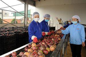 Nhiều biến động trên thị trường xuất khẩu nông sản