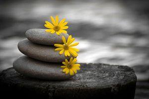 Sống trên đời: Im lặng là vàng, nhẫn nại là bạc, chịu thiệt là phúc