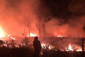 Điều tra truy tìm thủ phạm gây ra cháy rừng ở Vườn quốc gia Phú Quốc