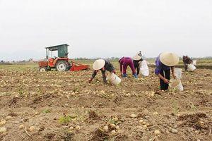 Quảng Ninh: Liên kết sản xuất an toàn, giải cơn khát đầu ra cho nông sản