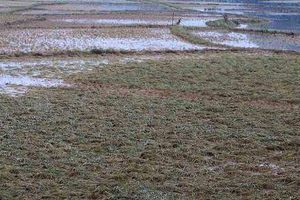 Dân nghèo phải hối lộ để nhận lại đất nông nghiệp của chính mình