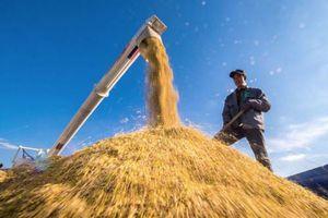 Nguy cơ khủng hoảng lương thực Châu Á
