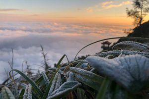 Nhiều nơi xuất hiện băng giá, đỉnh Fansipan dưới 0 độ C, Hà Nội lạnh buốt