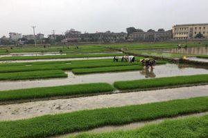 Cấp nước đổ ải, gieo cấy vụ Đông Xuân 2020 có rất nhiều khó khăn