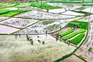 Khô hạn kéo dài, khó cấp nước cho vụ Đông Xuân