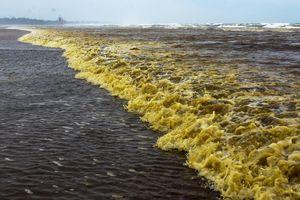 Cảnh sát điều tra nguyên nhân nước biển màu cà phê ở Quảng Ngãi